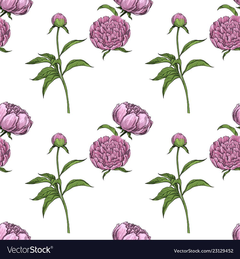 Peonies seamless pattern