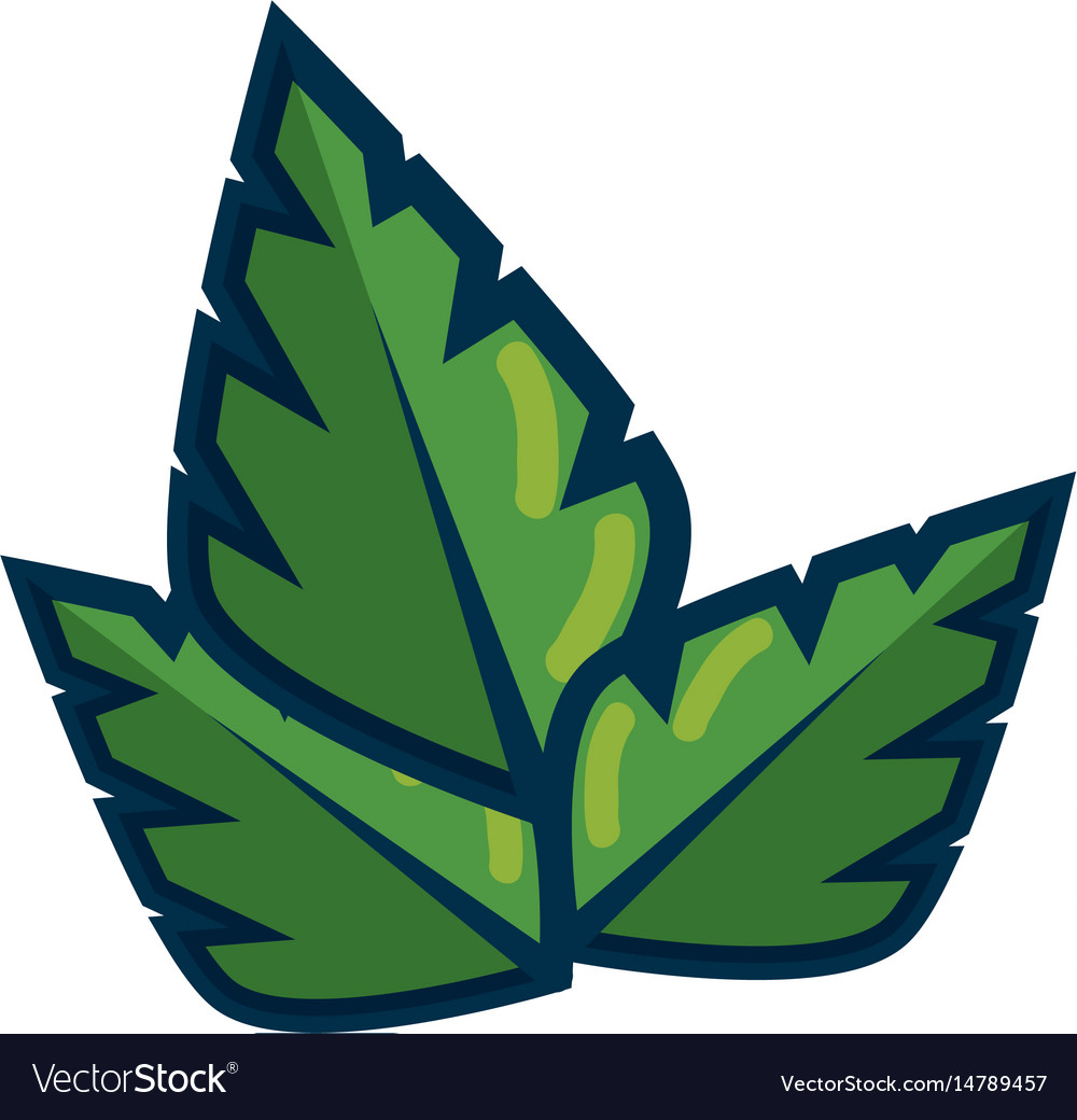 Leaves icon image vector image