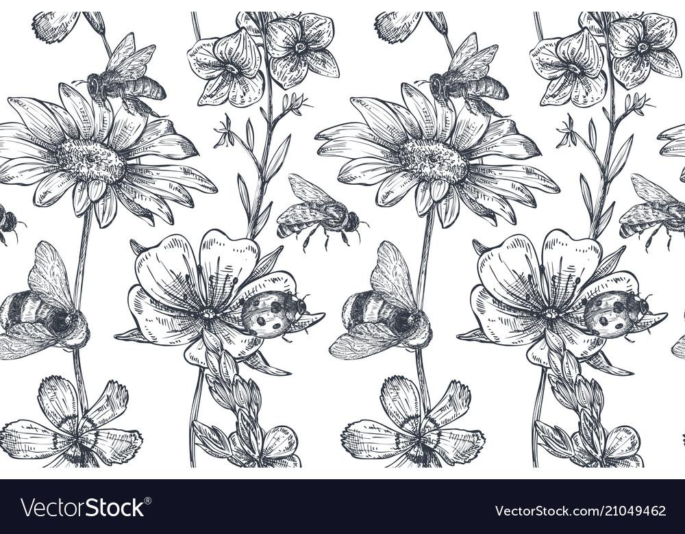 Seamless pattern with hand drawn chamomile