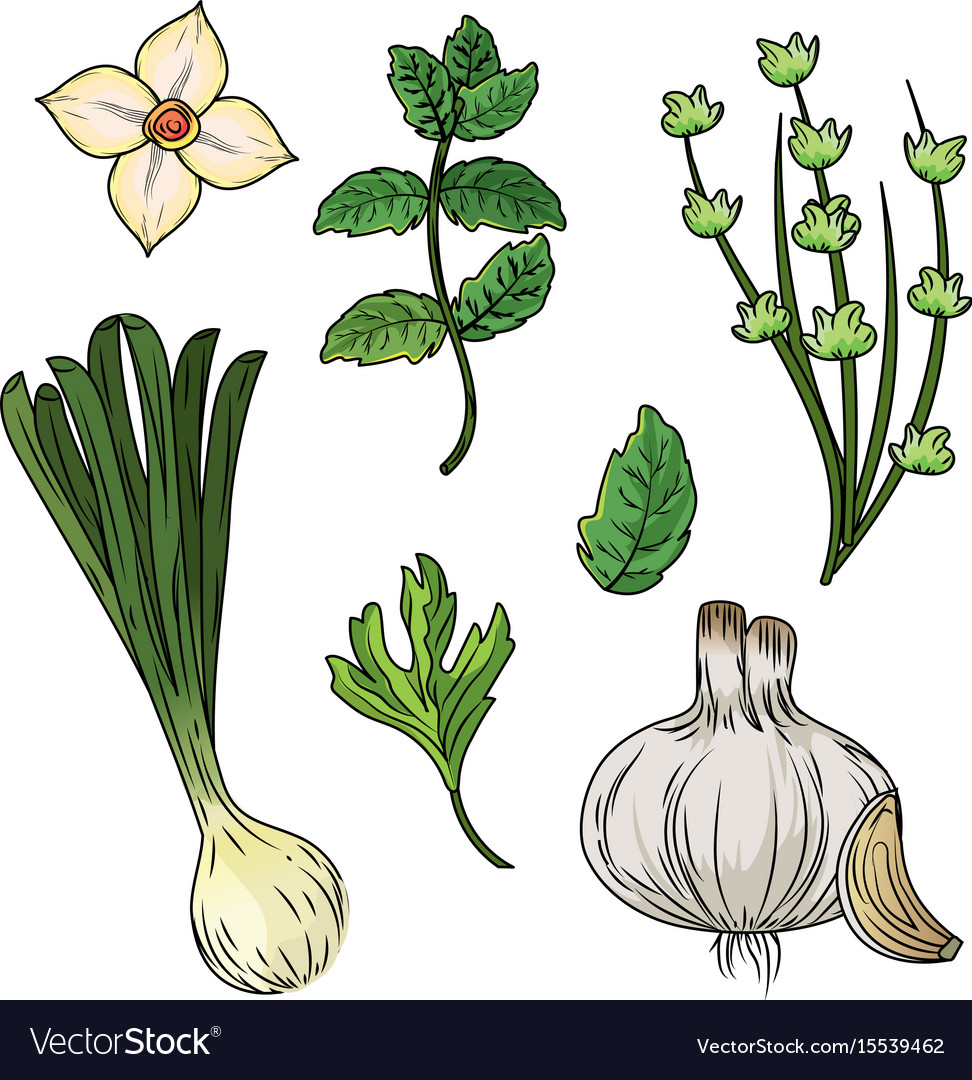 Set herbs and spices plants and organ food
