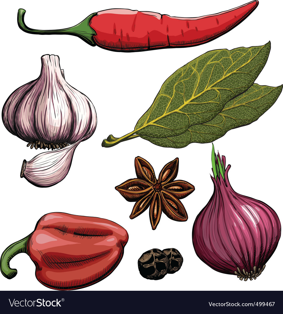 Cooking spices vector image