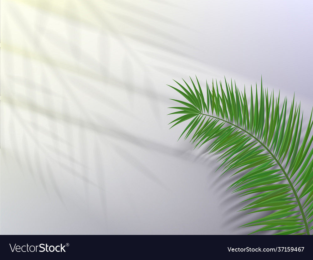 Palm leaf with shadow on light background