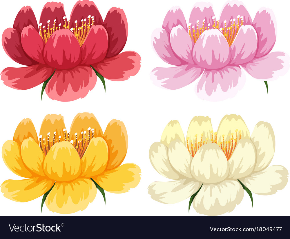 Four Colors Of The Same Type Of Flower Royalty Free Vector
