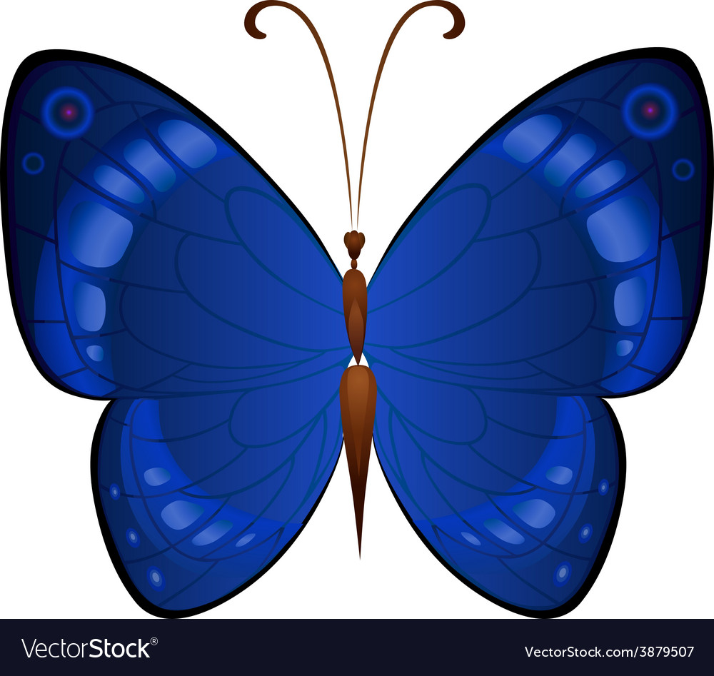 Dark Blue Butterflies Royalty Free Vector Image