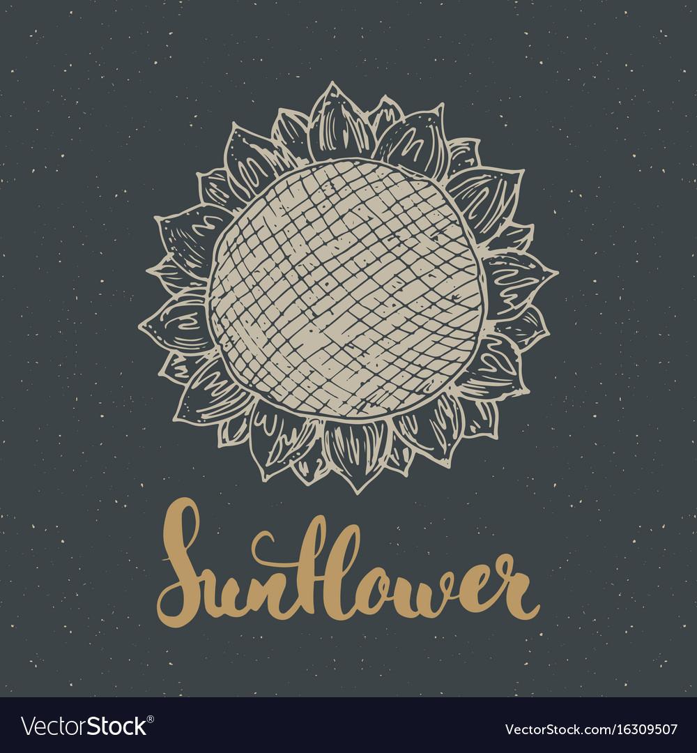 Sunflower sketch with lettering vintage label
