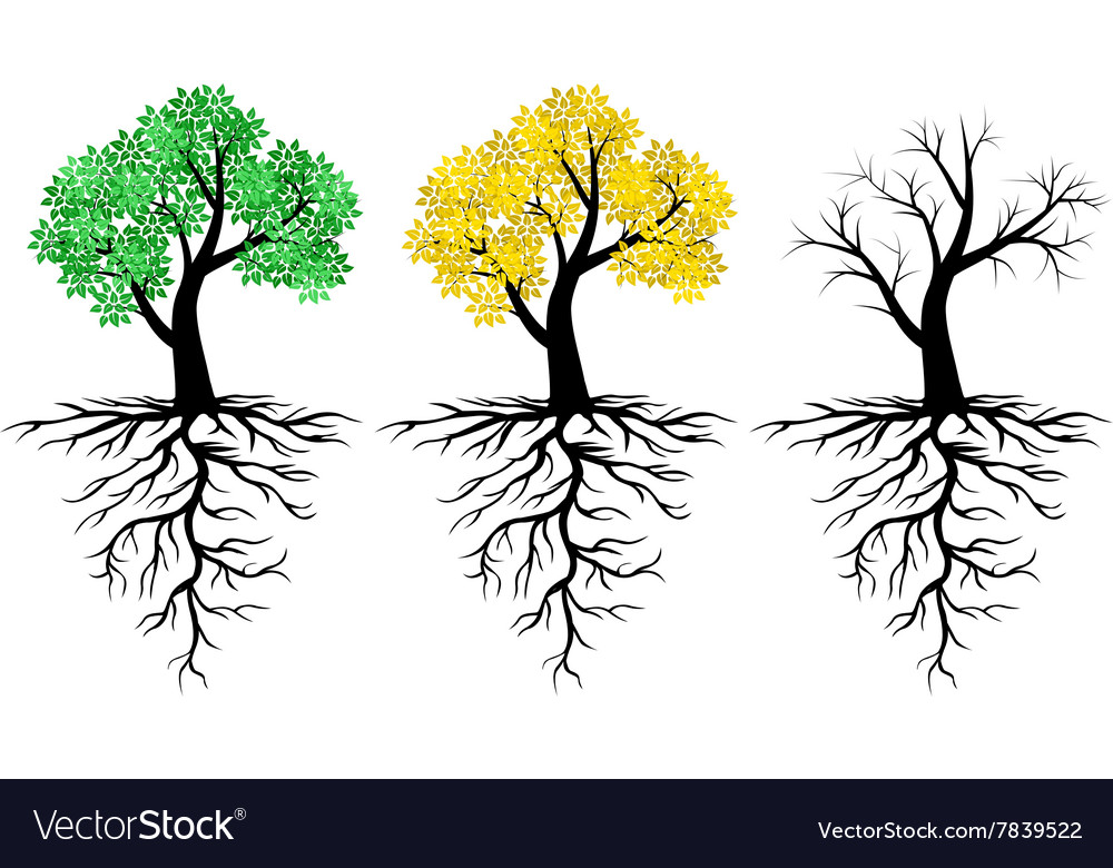 Tree root set