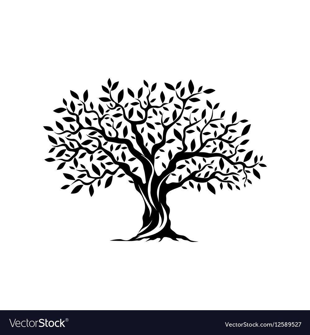 olive tree silhouette icon isolated on white vector image rh vectorstock com tree silhouette vector png tree silhouette vector file