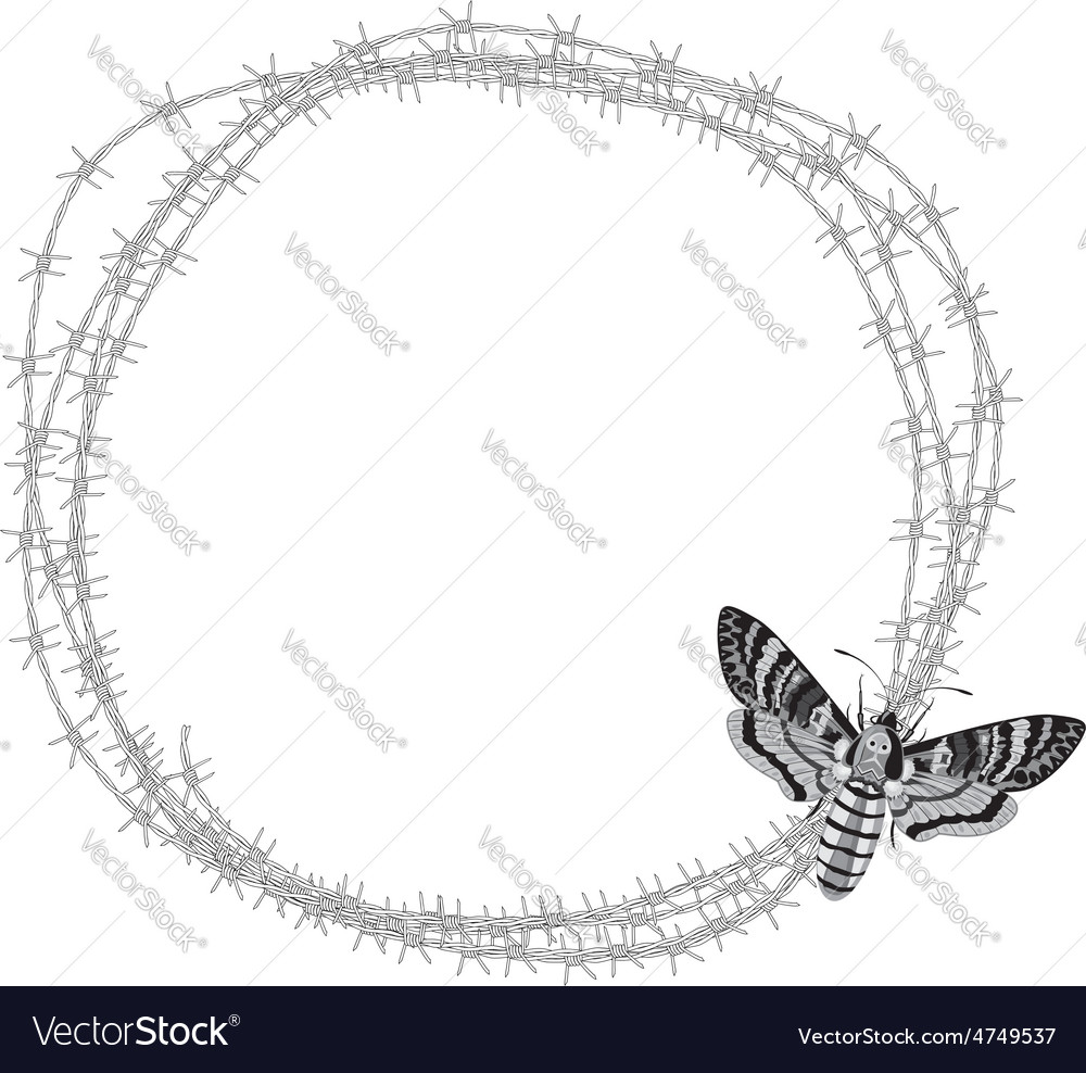 Butterfly and barbed wire