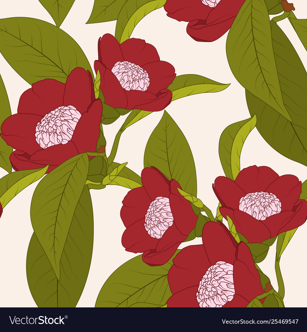 Red camellia flower plant with leaves outline on