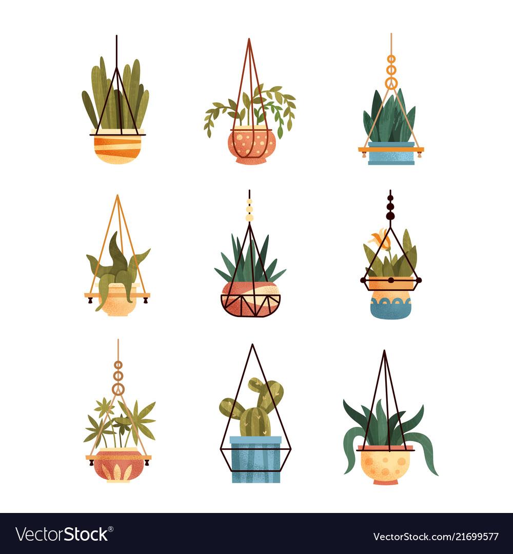 Green Hanging Indoor House Plants Set Elements Vector Image