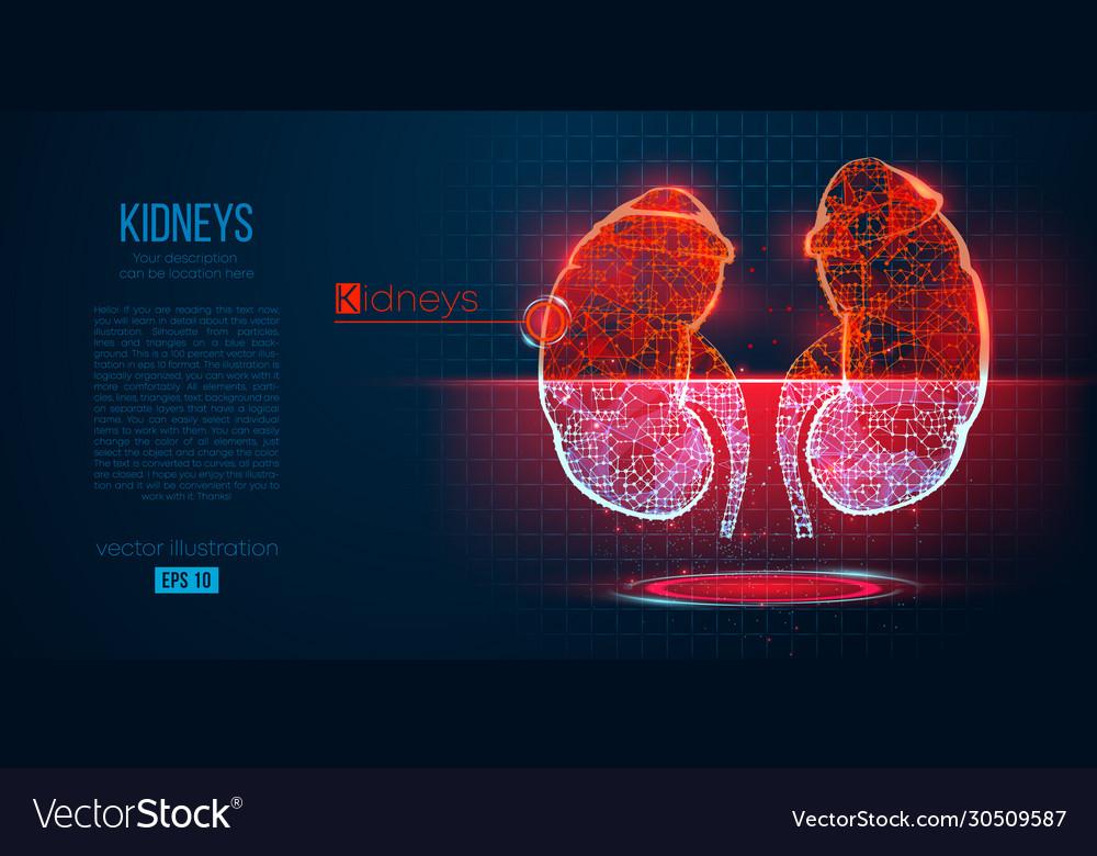 Abstract silhouette polygonal organ kidney