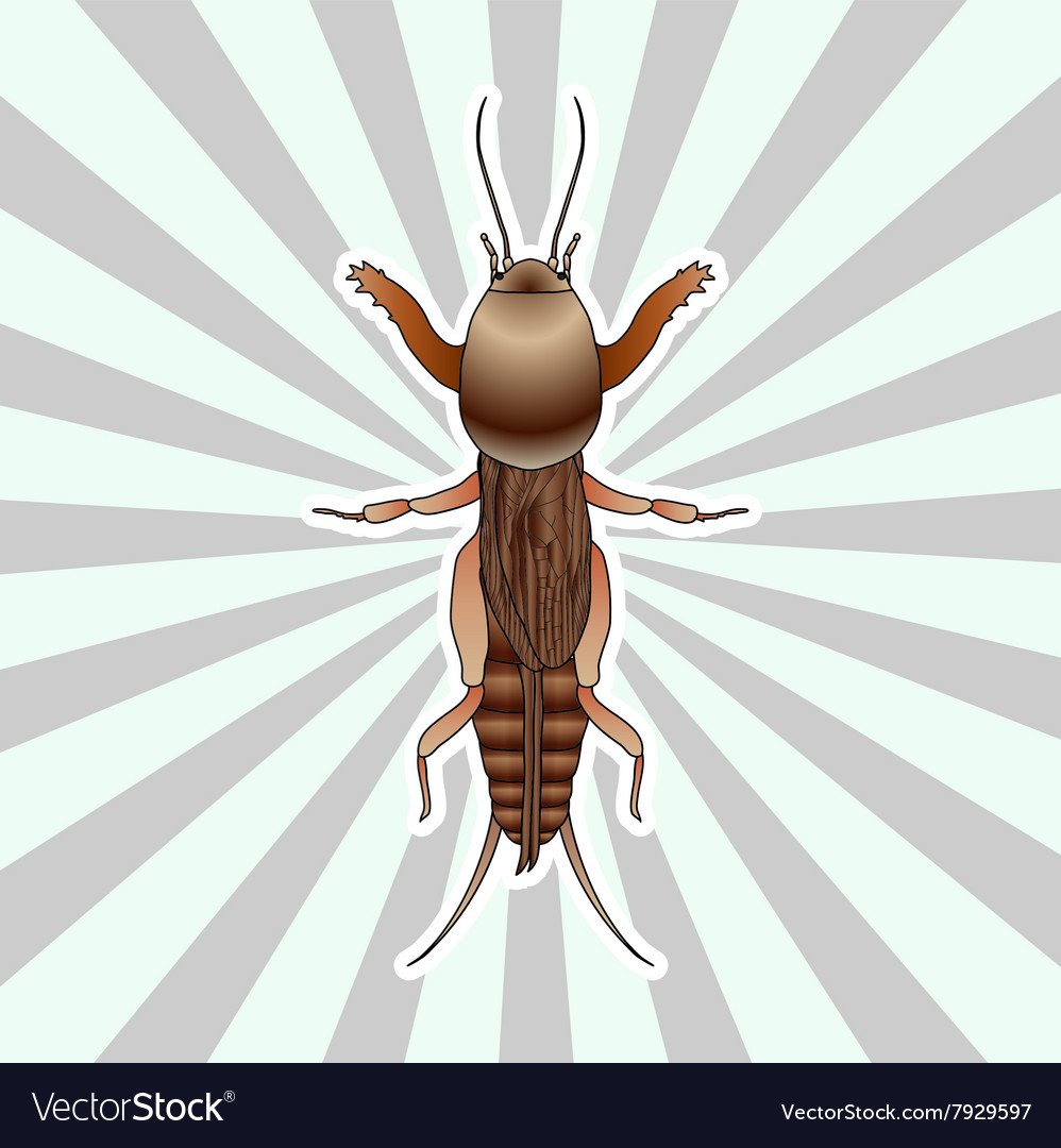 Anatomy of the European mole cricket Sticker Vector Image