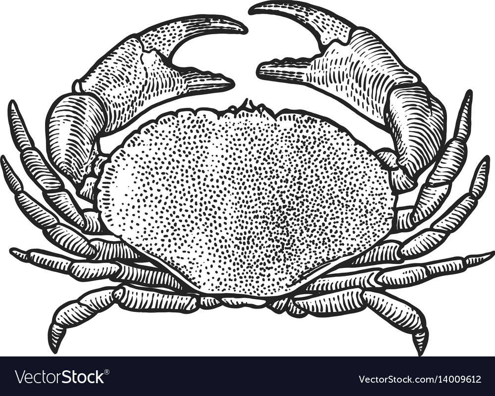 Famous Hermit Crab Anatomy Pattern - Physiology Of Human Body Images ...