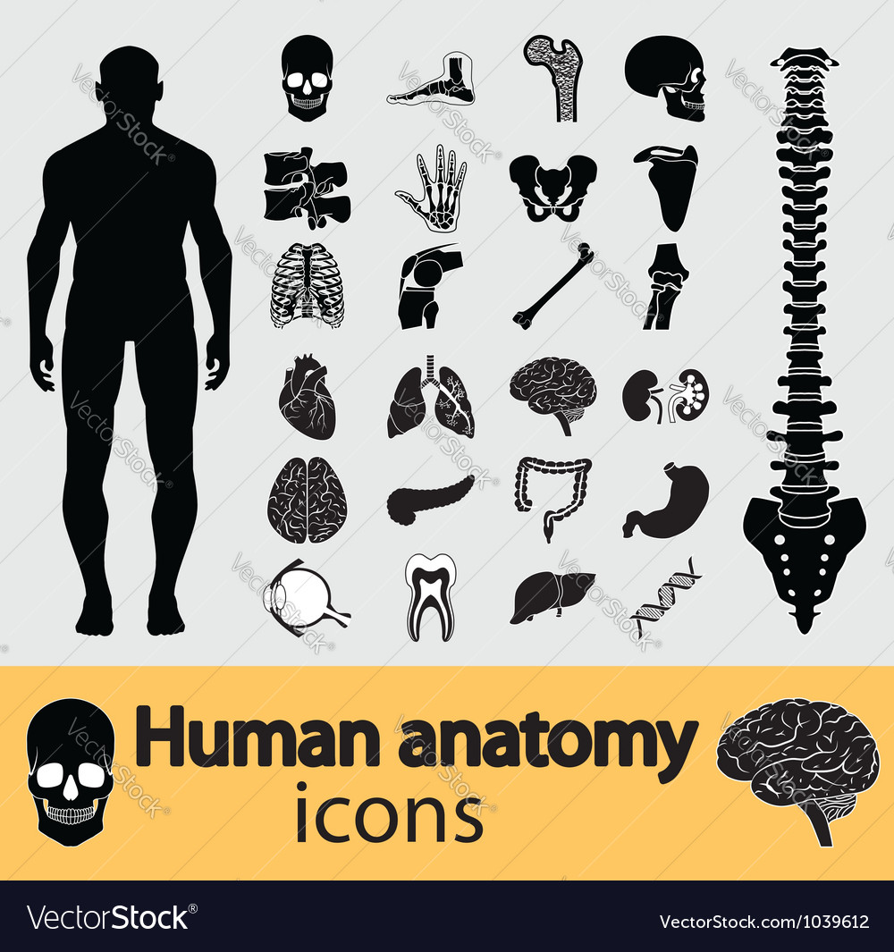Human anatomy icons vector image