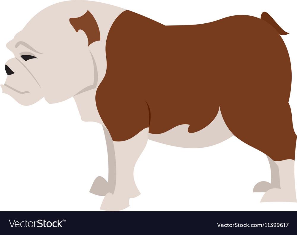 English bulldog breed