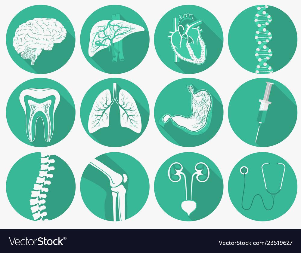 Internal human organs set and medical instruments