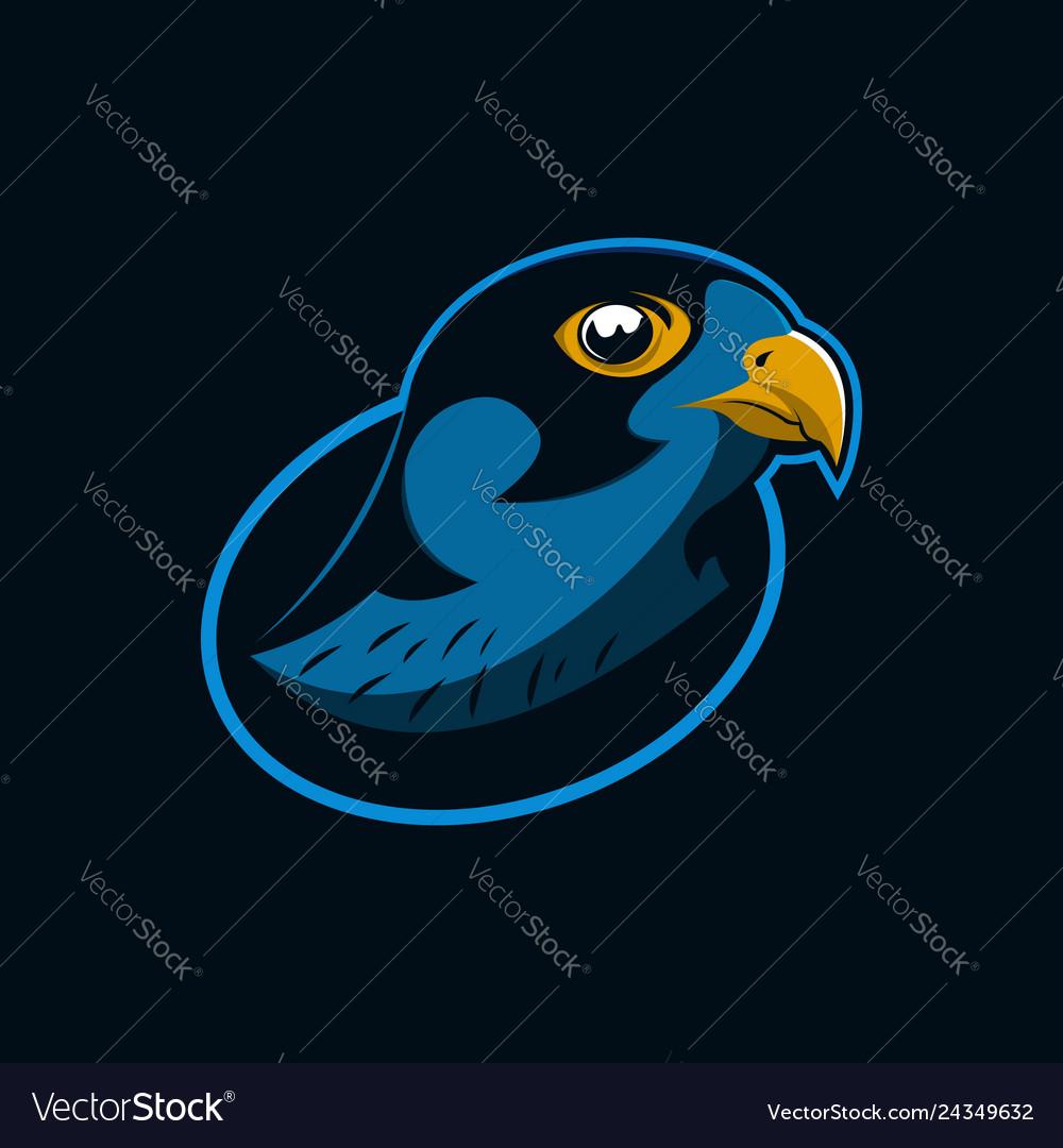 Hawk eagle head