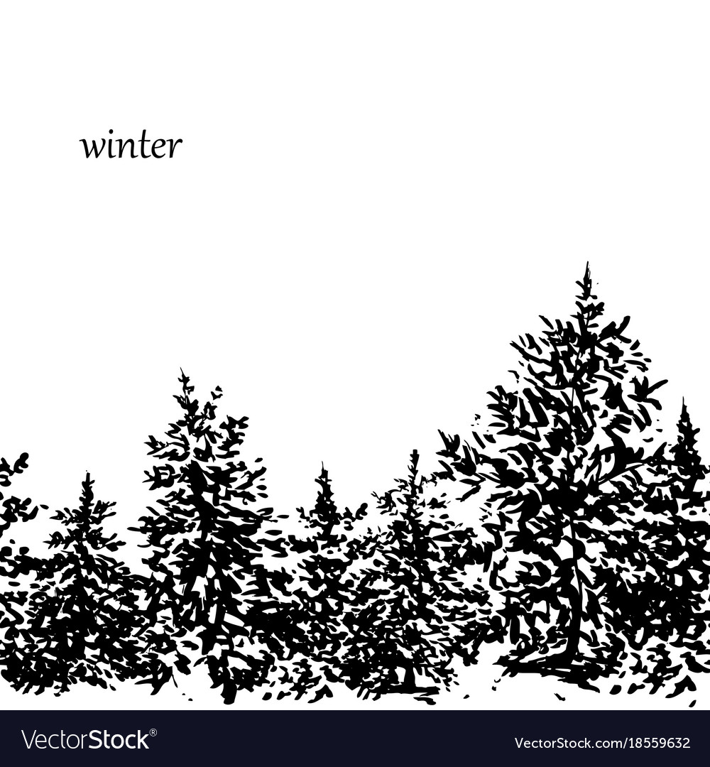 Ink fir forest background