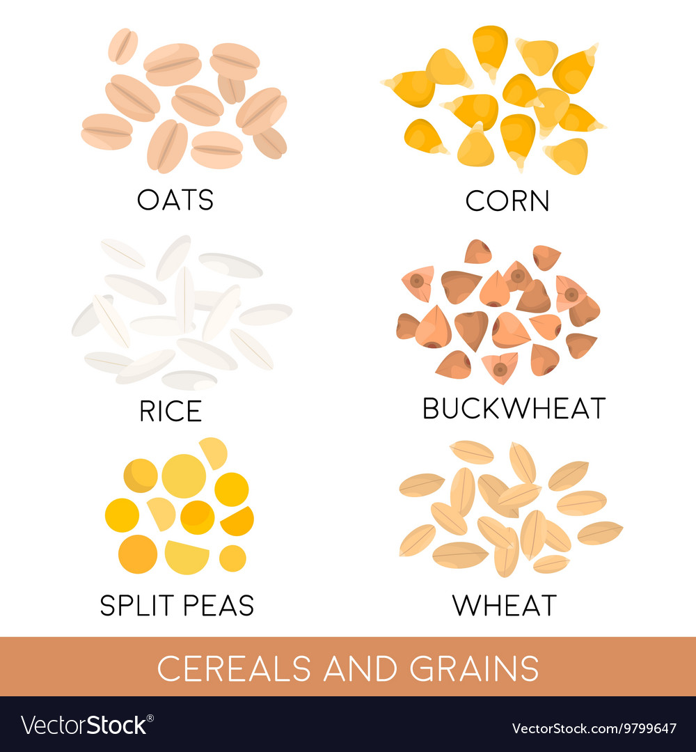 Cereals and grain oats rice buckwheat isolated