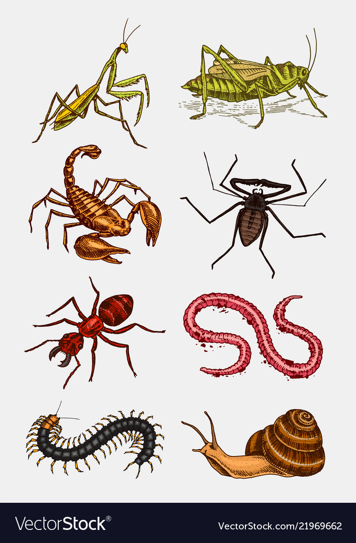 Big set insects vintage pets in house bugs