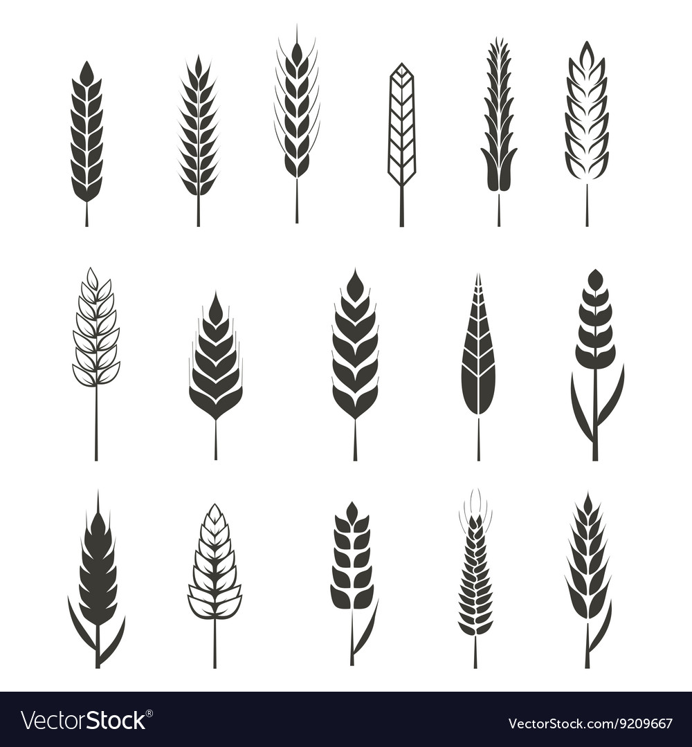 Set of simple wheat ears icons and design elements