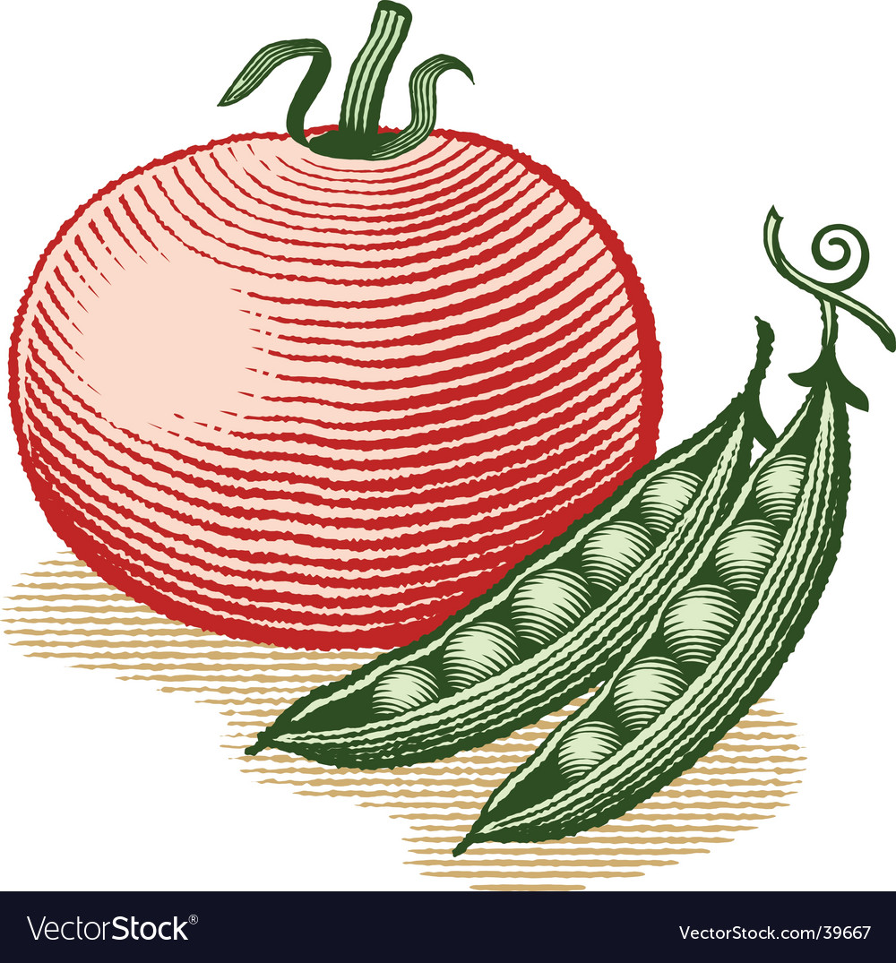 Tomato and peas vector image