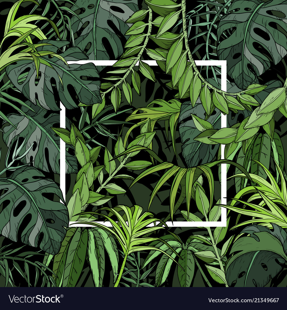 Tropical Background With Palm Leaves White Frame Vector Image Find the best free stock images about palm leaves. vectorstock