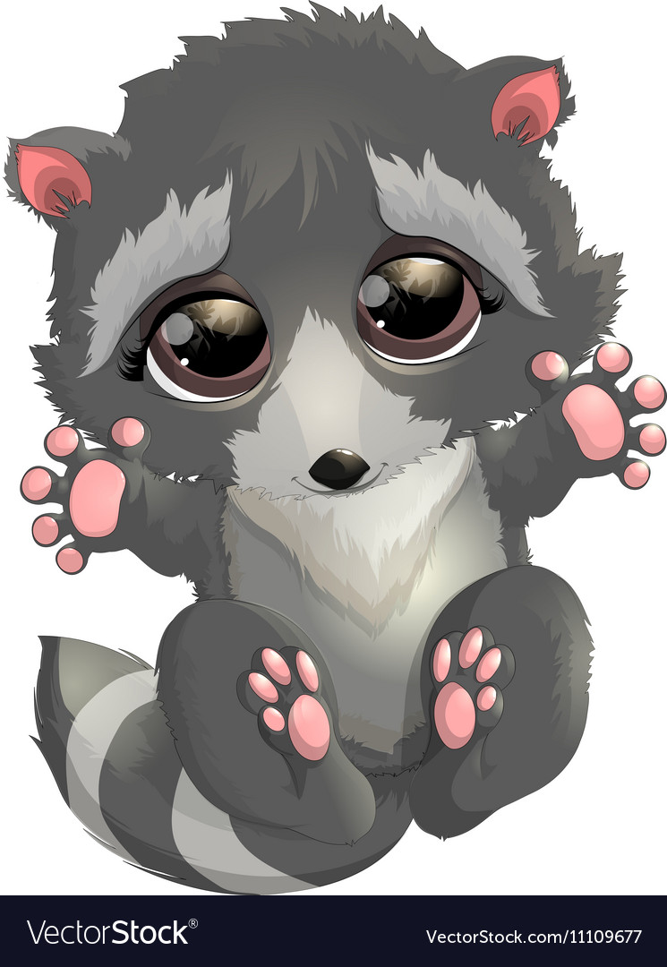 Beautiful gray raccoon