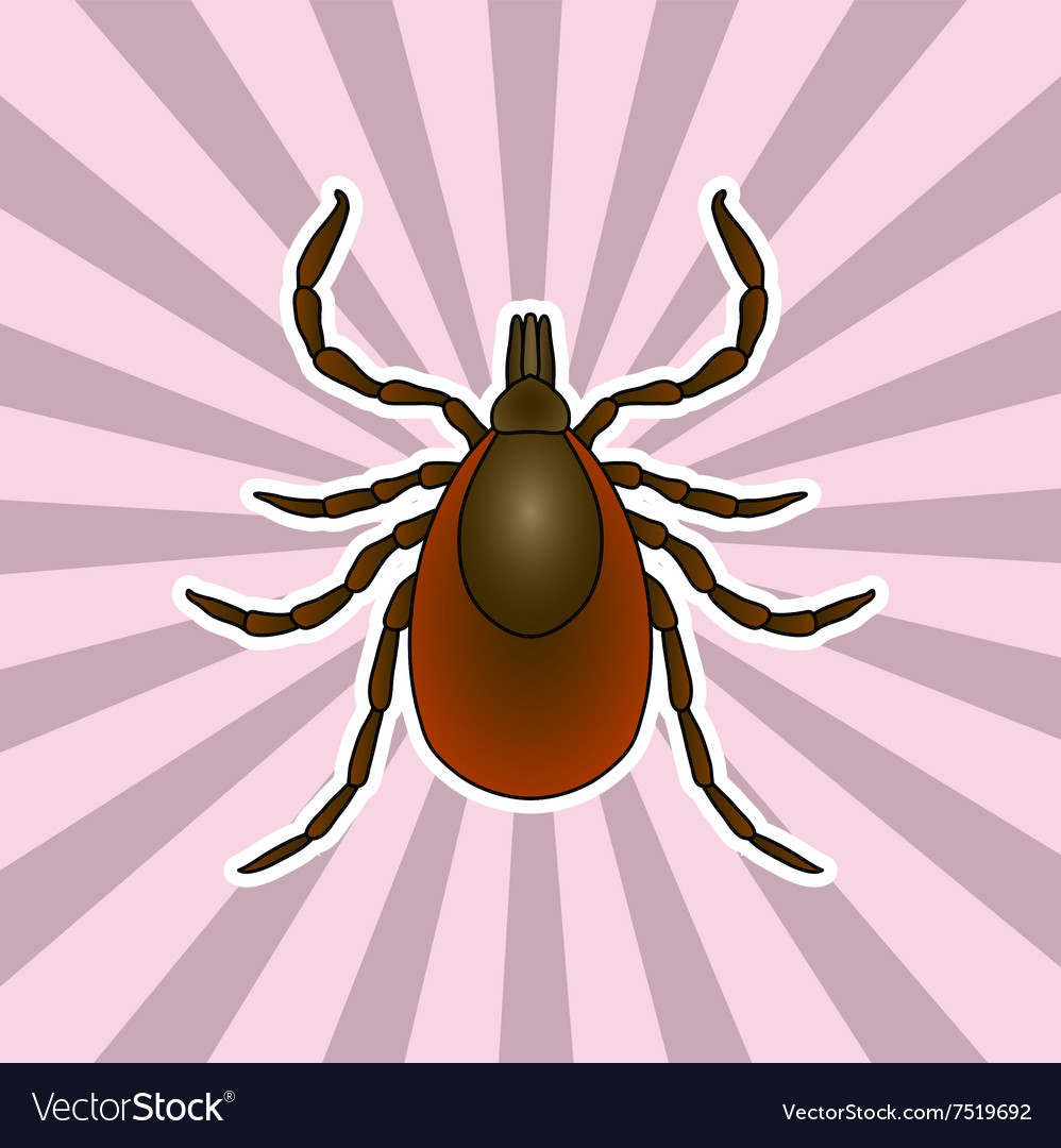Insect anatomy Sticker Tick parasite Sketch of Vector Image
