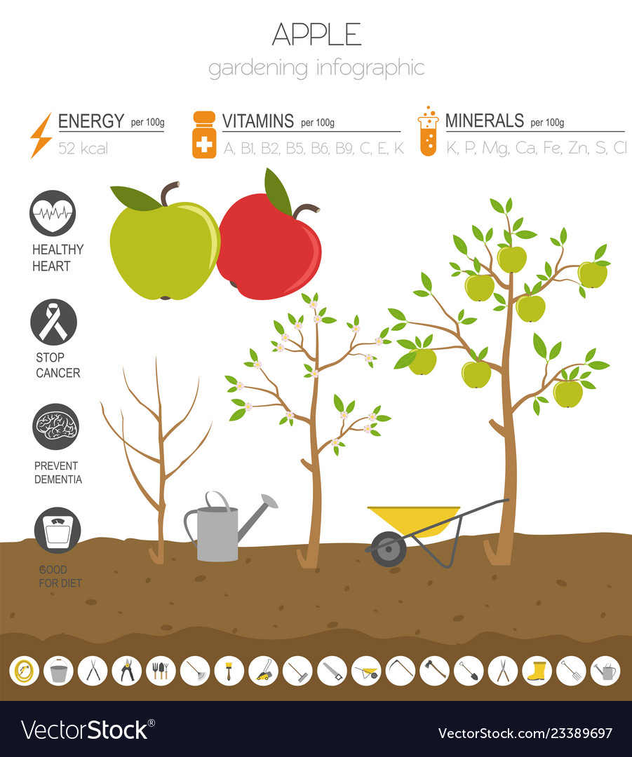 Apple beneficial features graphic template