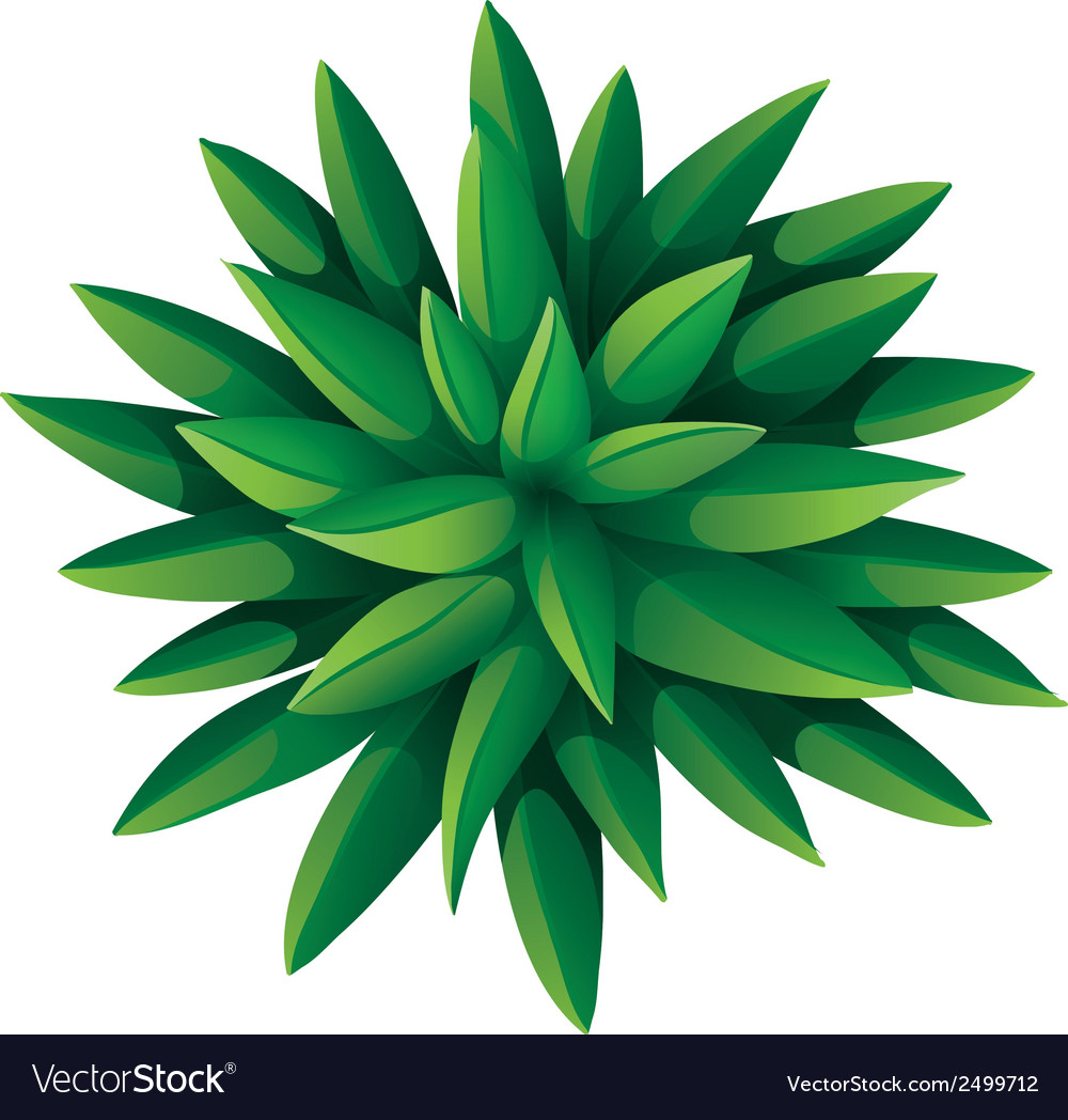A topview of a green landscaping plant vector image