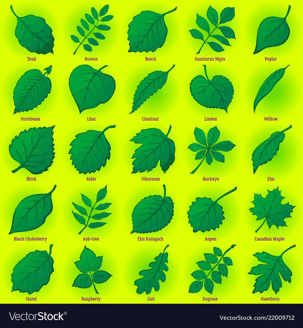 Leaves of plants set