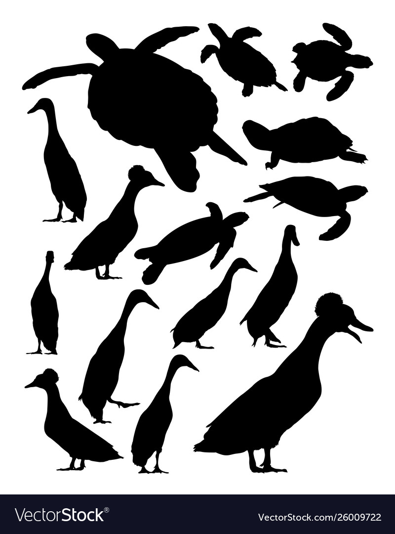 Turtles and duck silhouette