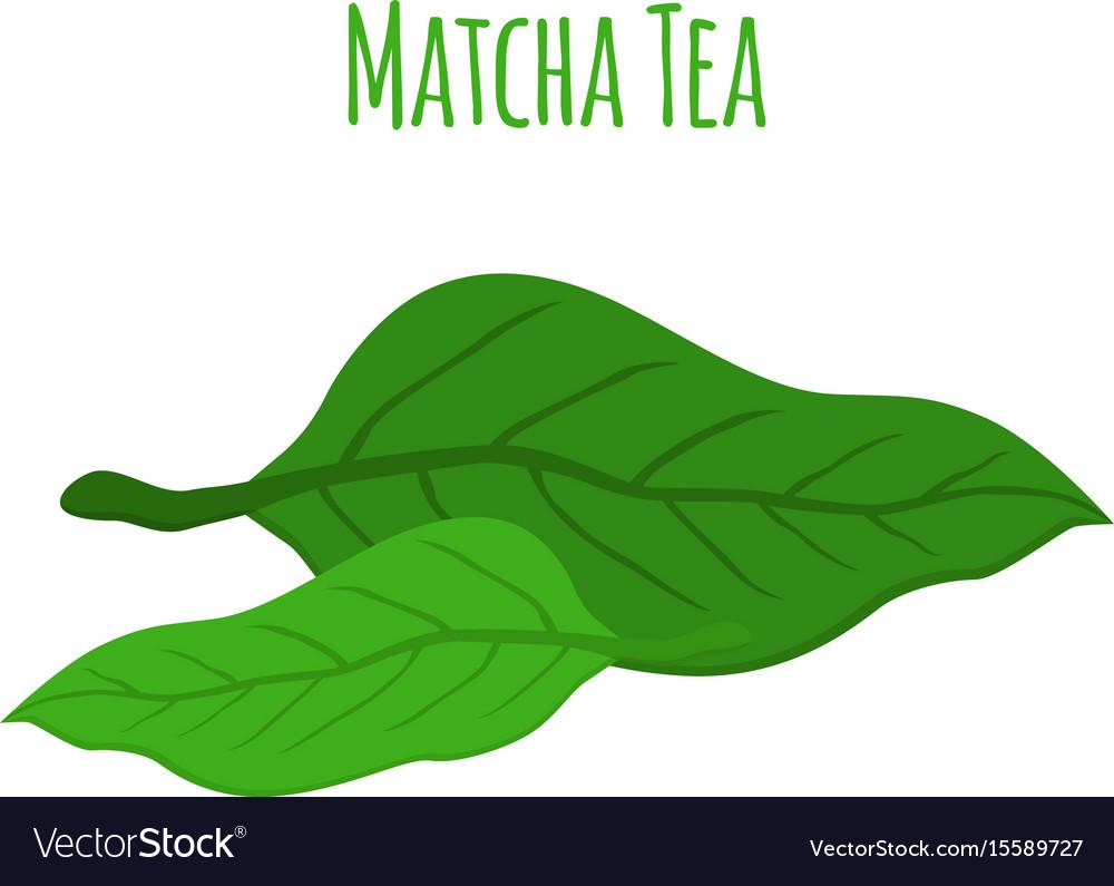 Matcha tea leaves - natural organic plant flat