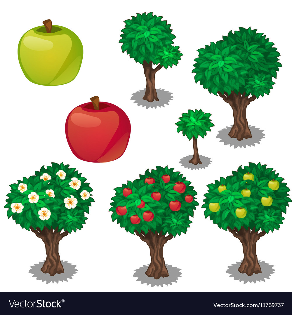 Planting and cultivation of green and red apple