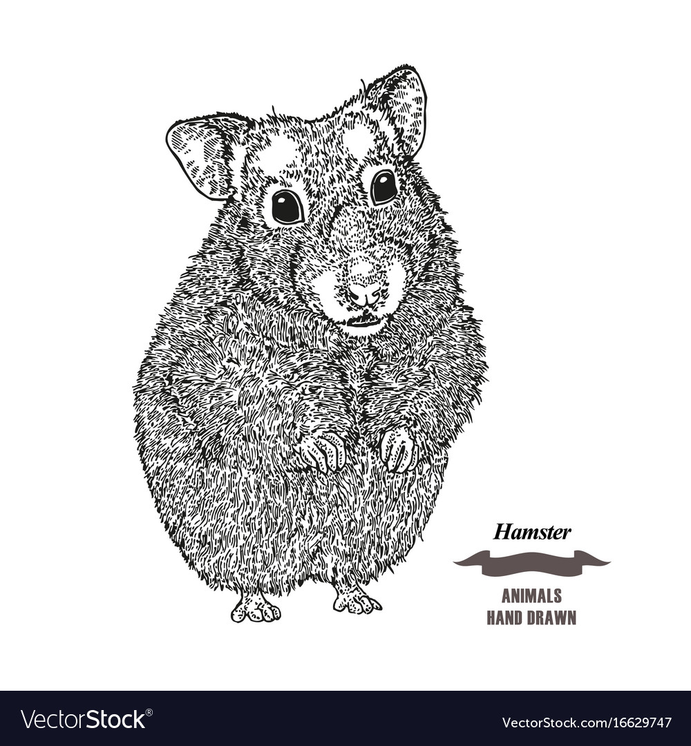 Hand drawn hamster black ink sketch animal on