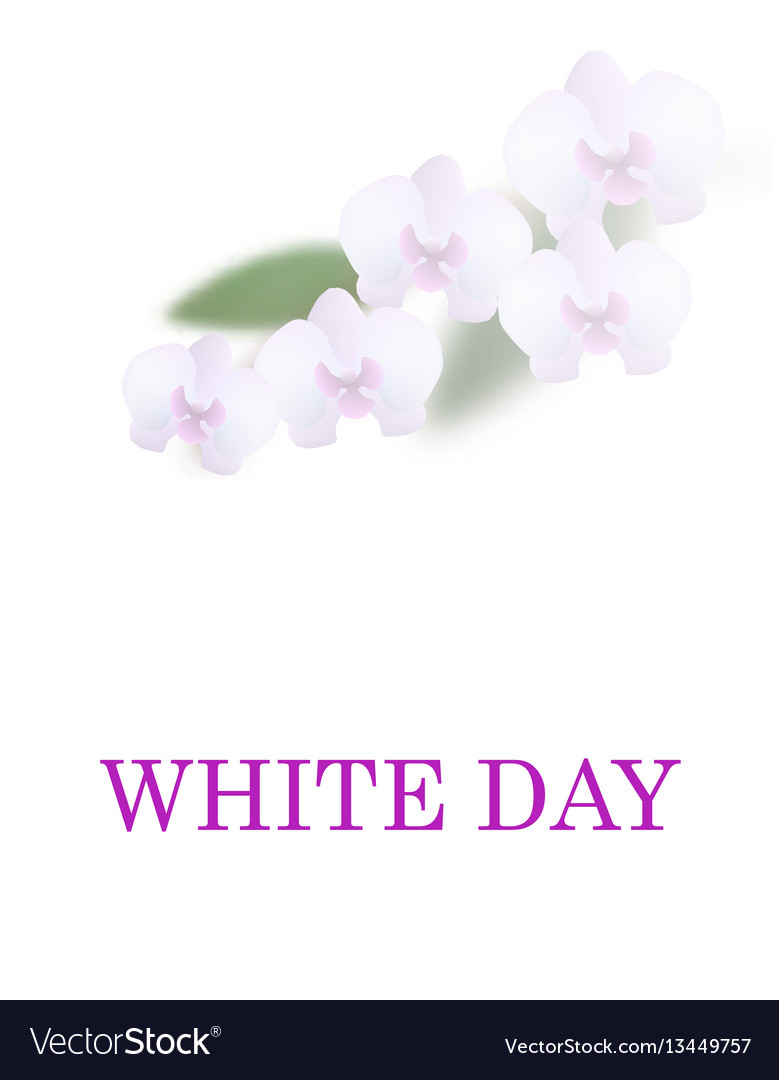 Greeting card white day beautiful orchid flowers vector image izmirmasajfo