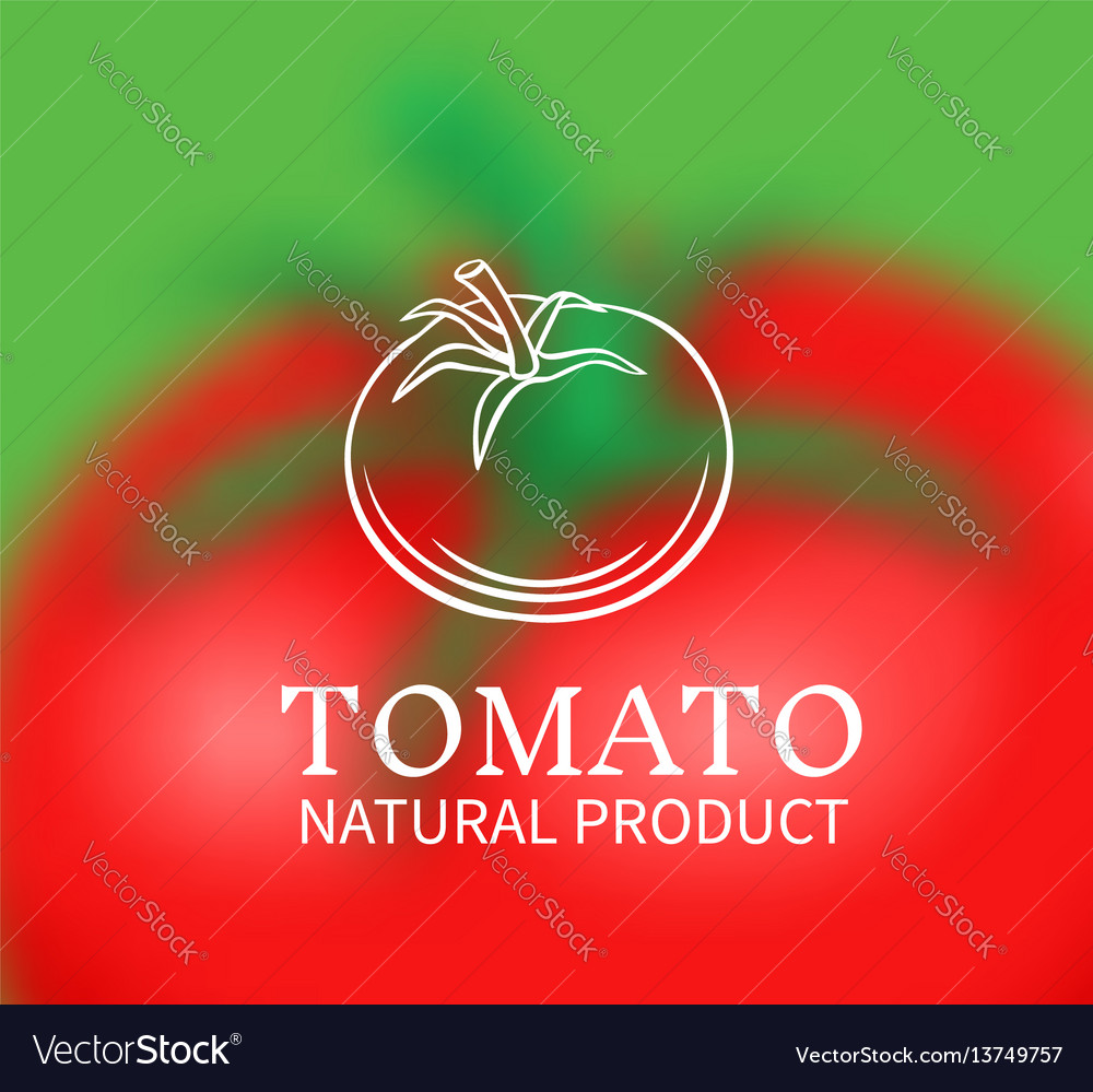 Hand drawn tomato on a blurred background