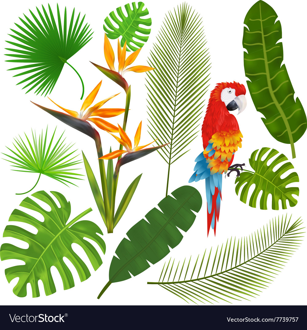 Tropical leaves flowers and macaw