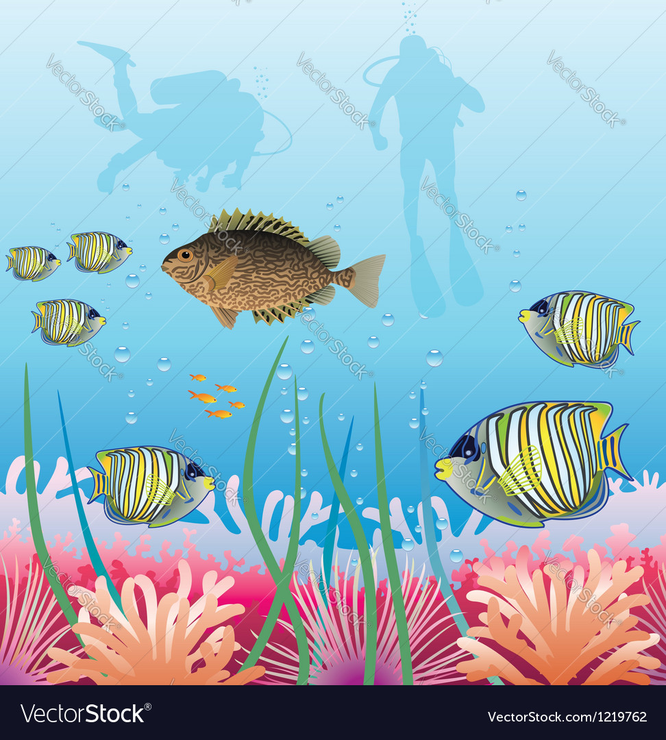 Tropical fishes and scuba divers vector image