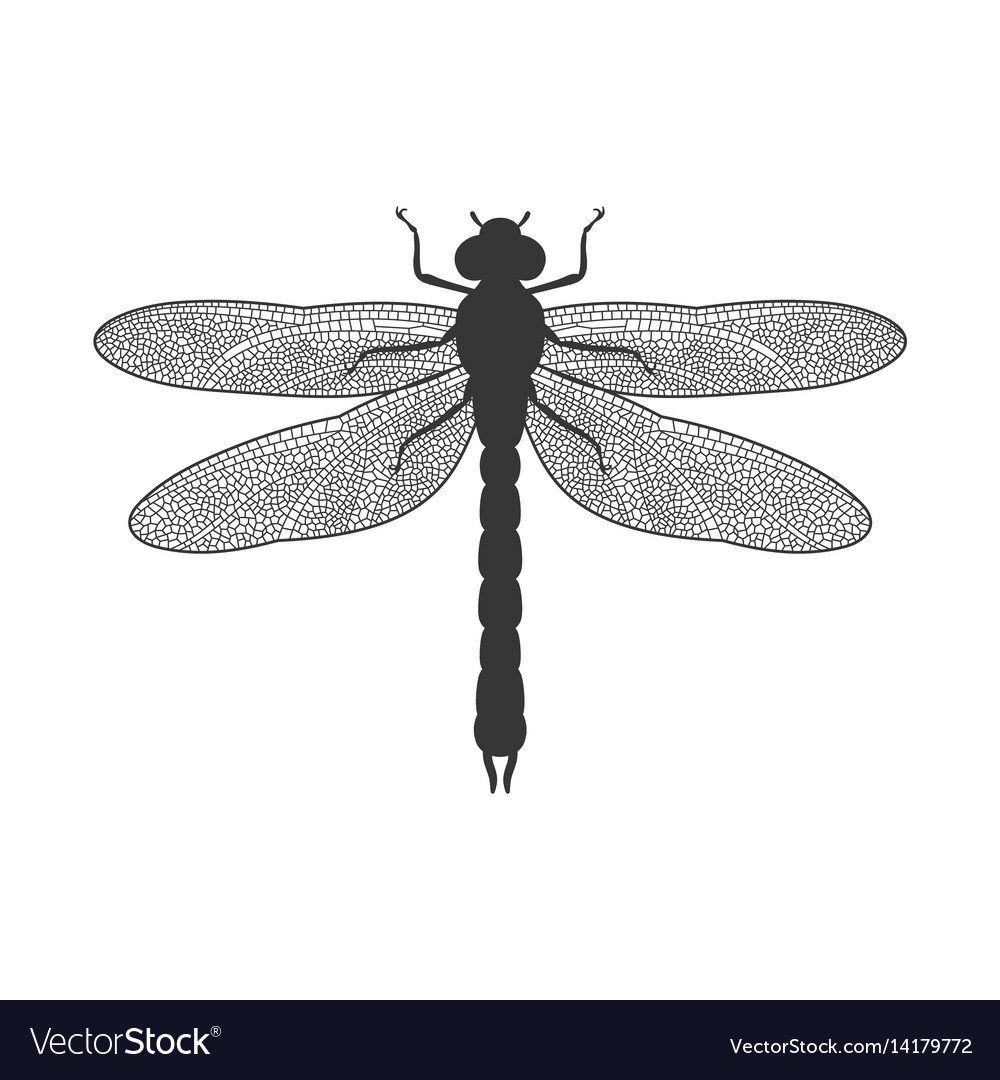 silhouette of dragonfly royalty free vector image