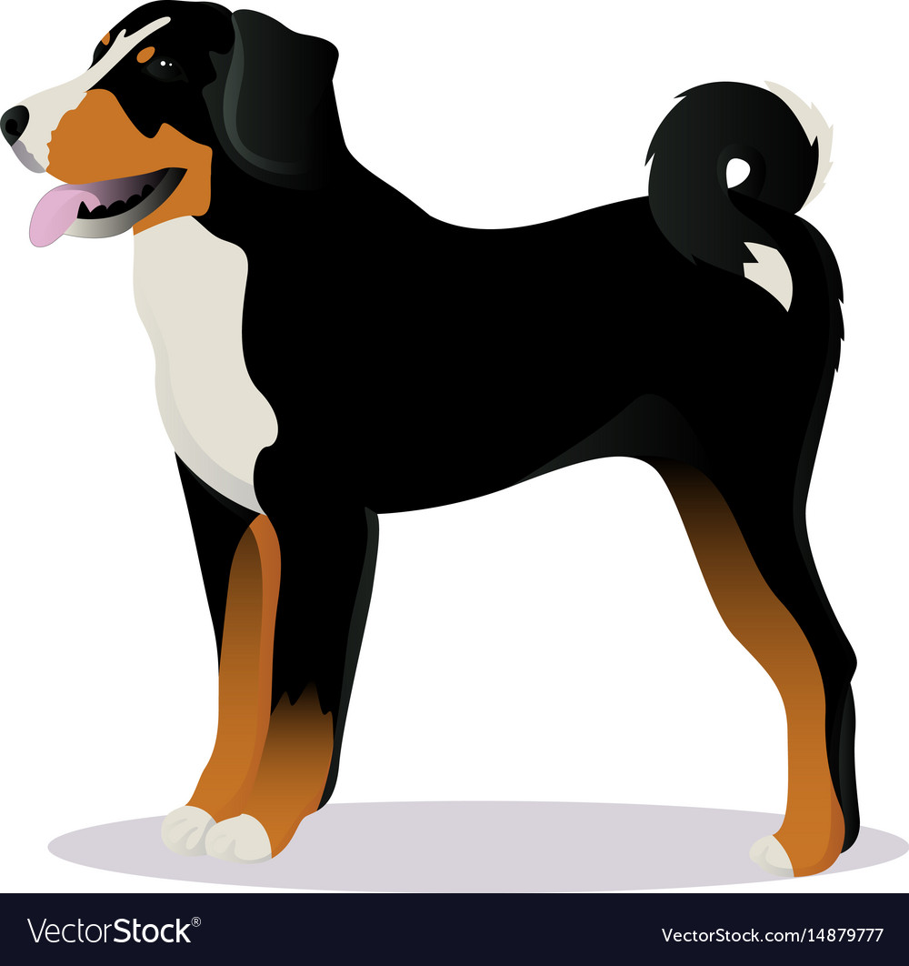 Appenzeller Sennenhund Dog