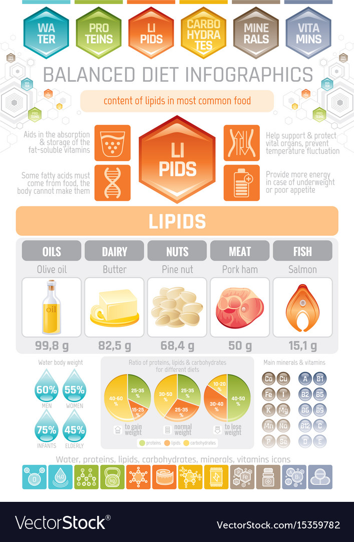 Fat lipids diet infographic diagram poster water vector image ccuart Images