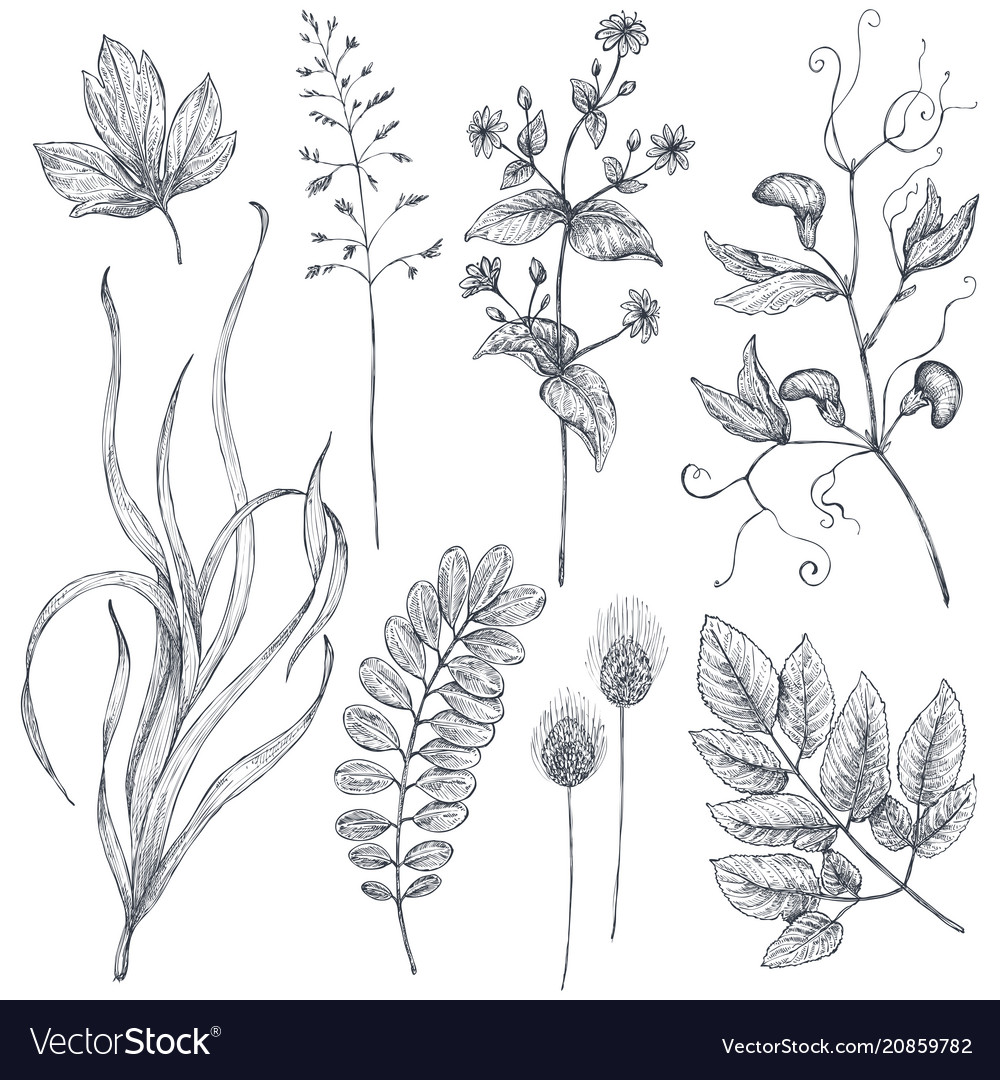 Hand drawn flowers and herbs set