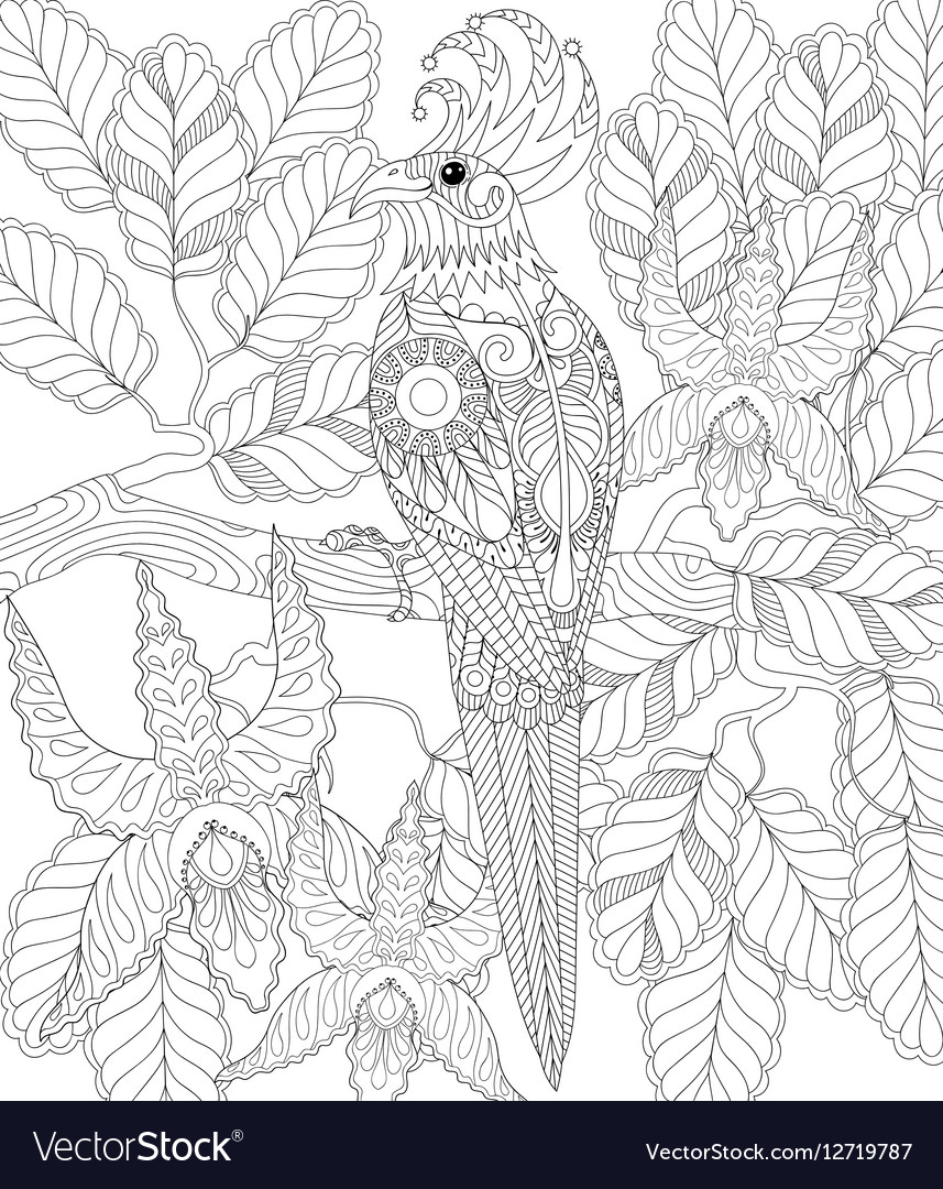 Exotic tropical zentangle bird for adult anti vector image