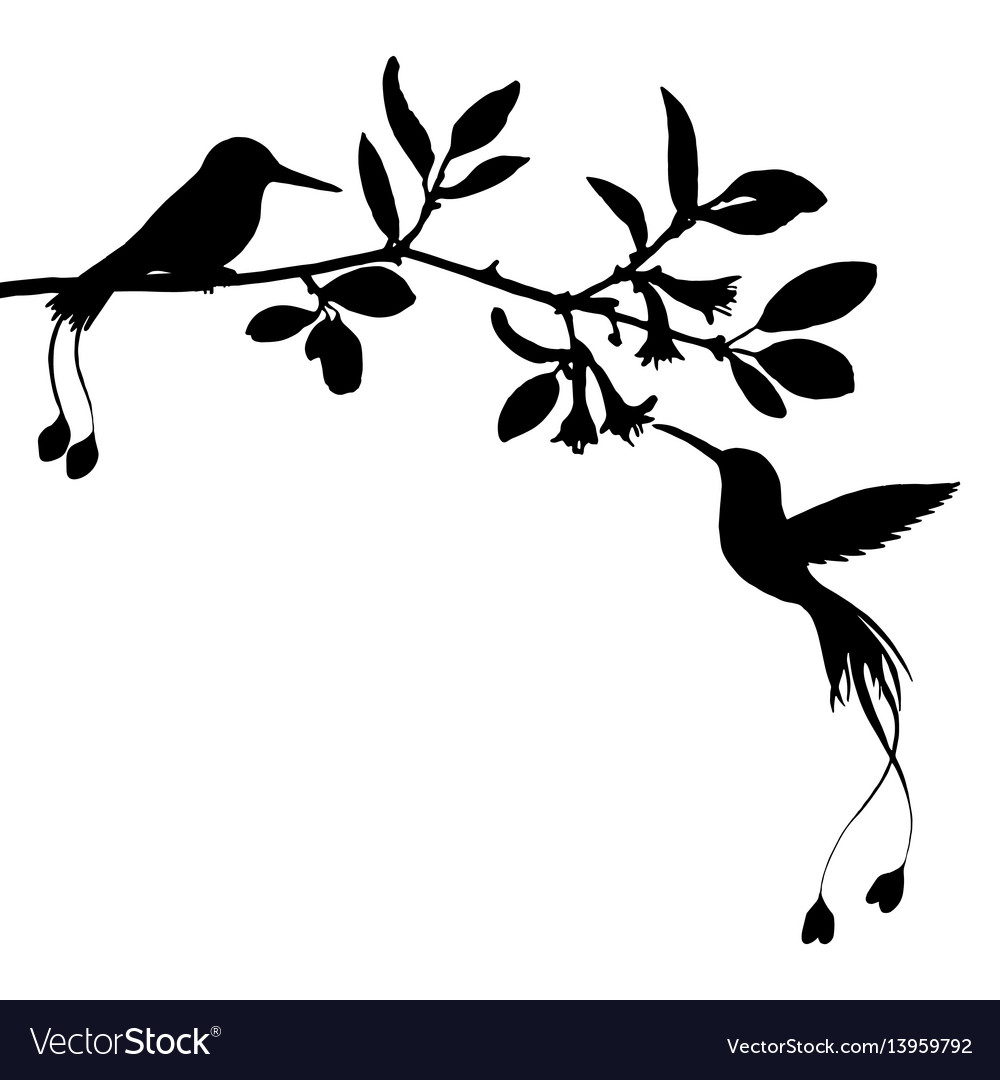 Hummingbirds and flowers silhouettes vector image