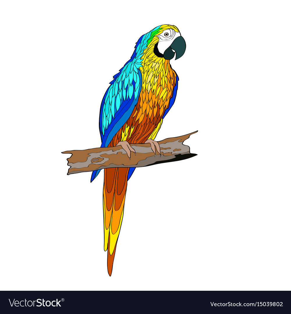 Sitting on a branch parrot