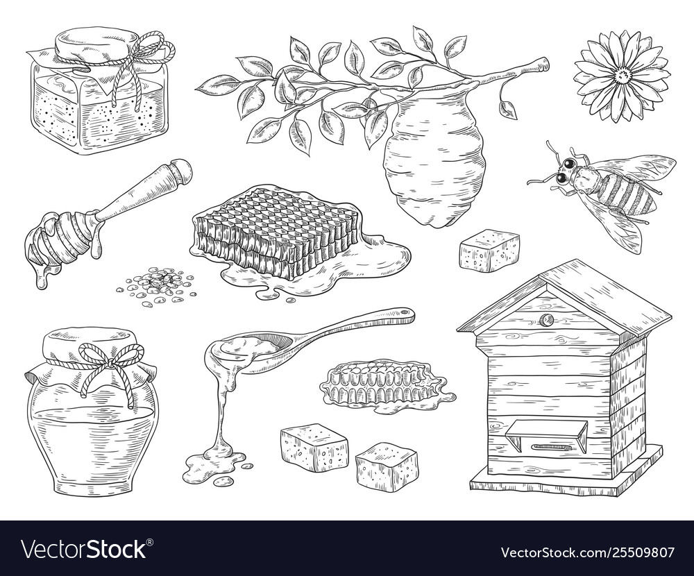 Hand drawn honey vintage bee honeycomb and honey