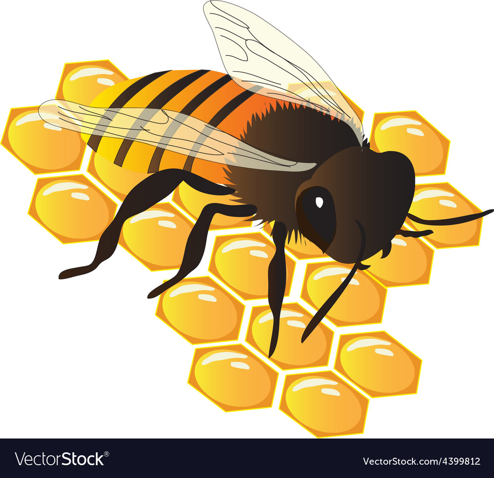 Bee on hive