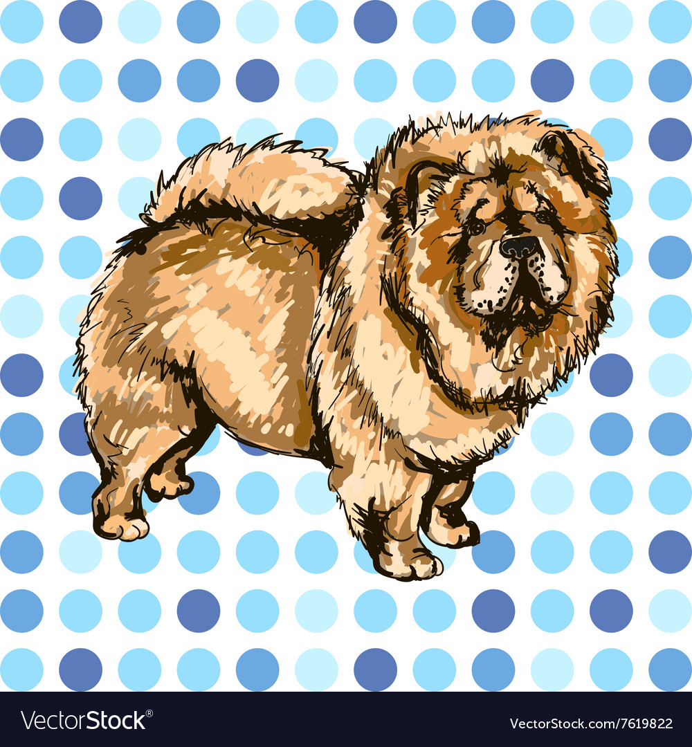 Pets dog vector image